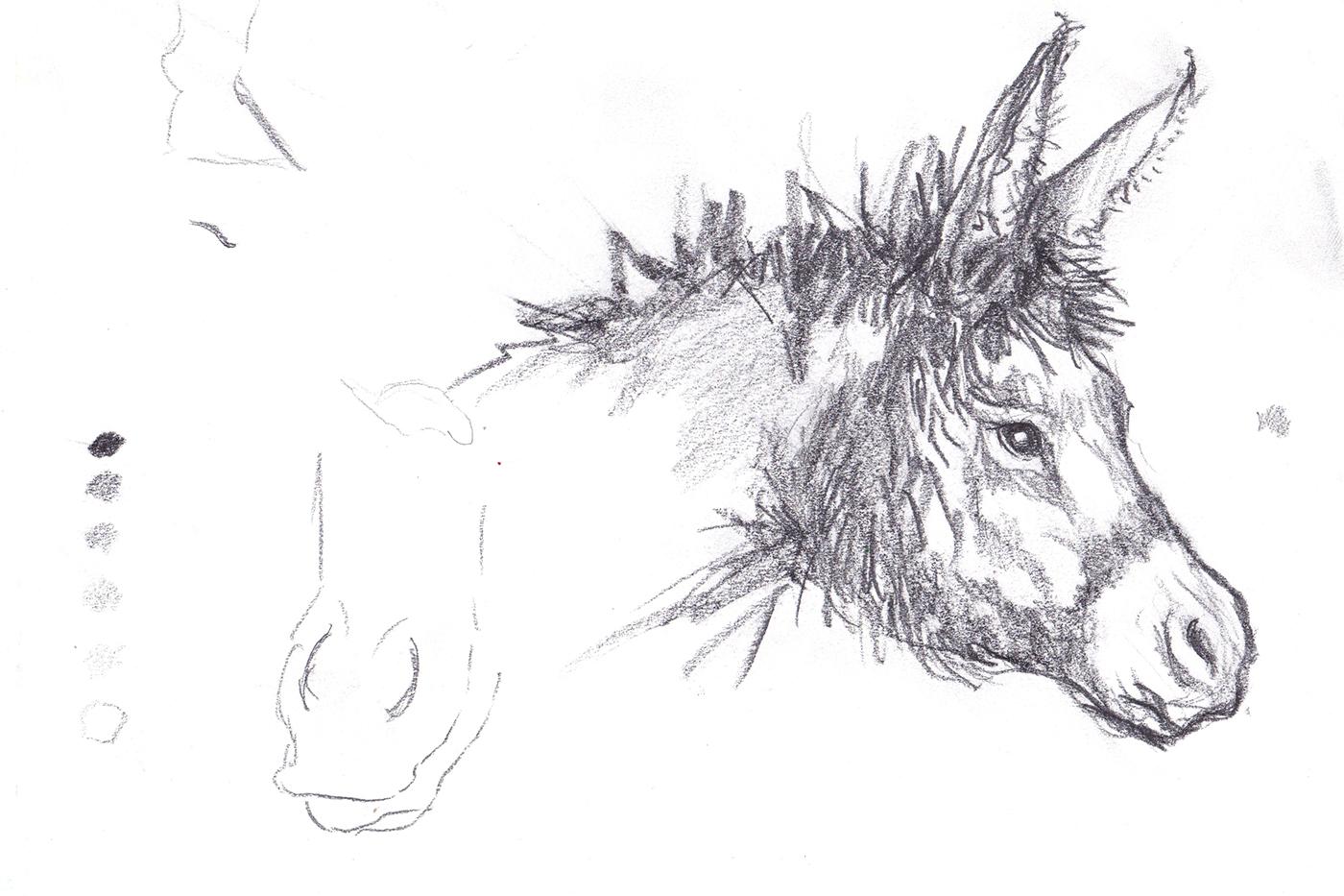 Donkey_Sketch