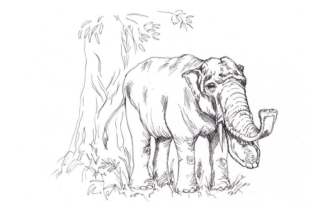 Elephant_Prep2