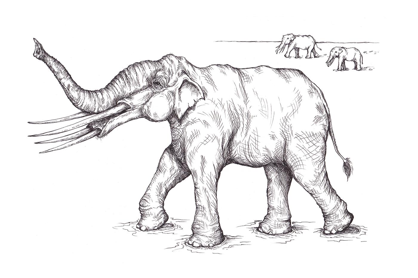 PrehistoricElephant1