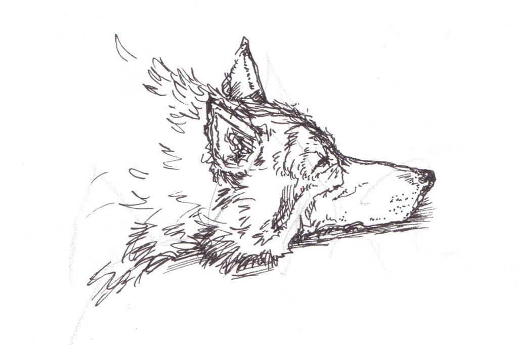 Wolf_Sketch